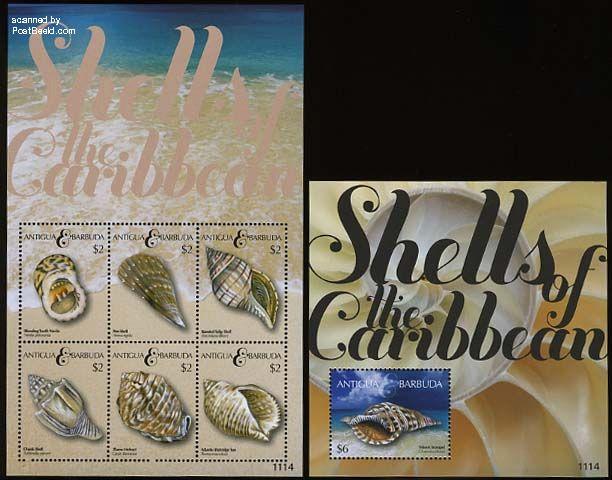 Shells 2 s/s