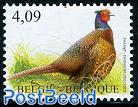 Birds, Pheasant 1v