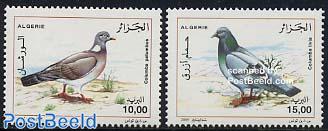 Pigeons 2v