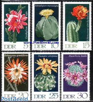 Cactus flowers 6v