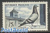 Pigeons 1v