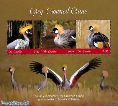 Grey crowned Crane 3v m/s