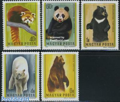Bears 5v
