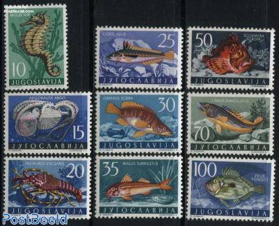 Adriatic sea animals 9v