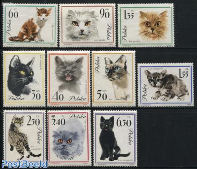 Cats 10v