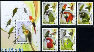 Parrots 5v + s/s