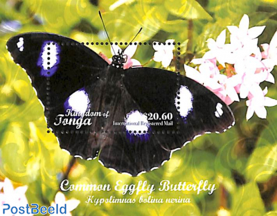 Common Eggfly Butterfly $20.60 s/s