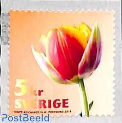 Tulip 1v s-a