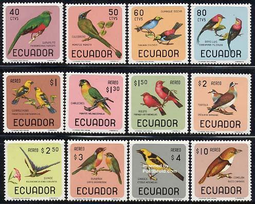 Birds 12v