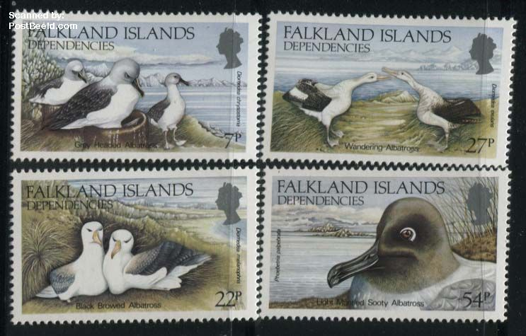 Albatros birds 4v