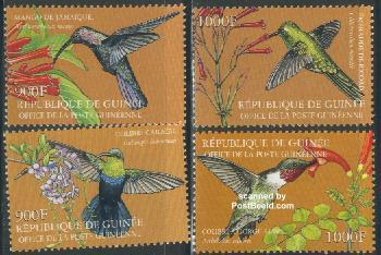 Hummingbirds 4v