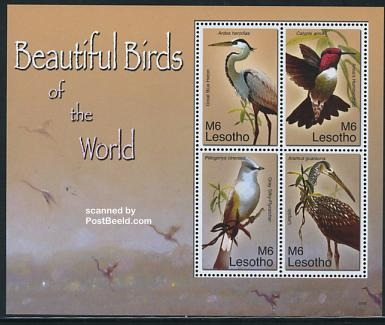 Beautiful birds 4v m/s