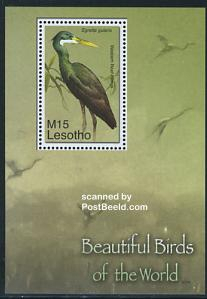 Beautiful birds s/s