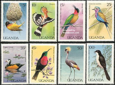 Birds 8v